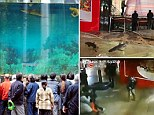 Before: The aquarium was a popular attraction at the shopping centre in Shanghai