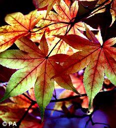 Autumn colours are seen at The Quinta Arboretum