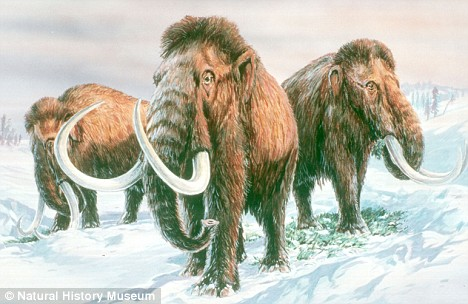 Ancient: The very old bacterium which can prolong human life span was found at a 'graveyard' of extinct mammoths  in Siberia