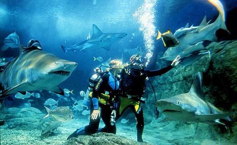 Diving with sharks in Melbourne Aquarium