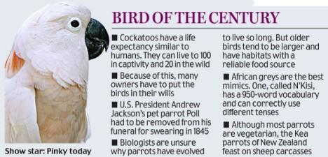 bird of the century