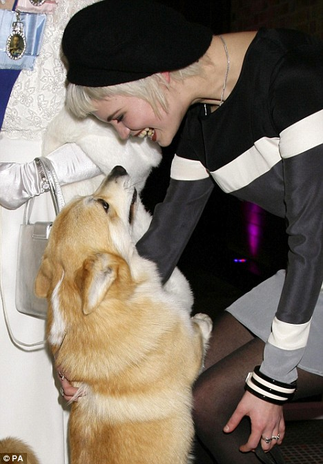 Pixie Geldof makes friends with a corgi belonging to Queen Elizabeth II impersonator, Mary Reynolds, last night