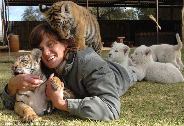 SOUTH AFRICA: Riana Van Nieuwenhuizen with Atrara and Armageddon the 9 month-old tiger cubs, and white lion cubs Vanilla, Snowball and Snowflake and they're 7wks old.