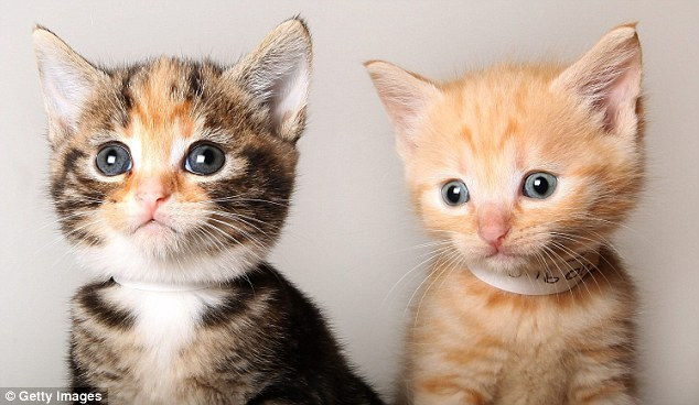We're bundles of fun: Kittens Cleo (left) and Samson are keeping their eyes peeled for new owners