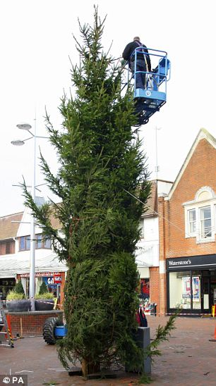 £14,000 'traffic cone' Christmas tree replaced with 30ft fir after thousands complain