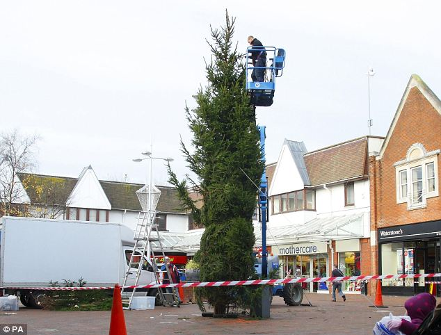 Traditional: The town square was cordoned off today as the new tree was put in place