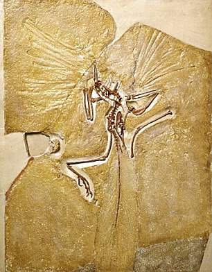 The archaeopteryx is delicate and detailed