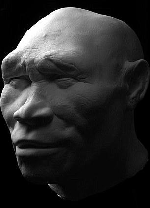human ancestors