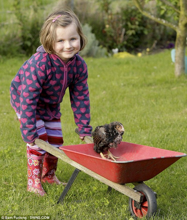 Tulip hitches a ride in a wheelbarrow belonging to Lyn Newman's granddaughter Nicole Turner