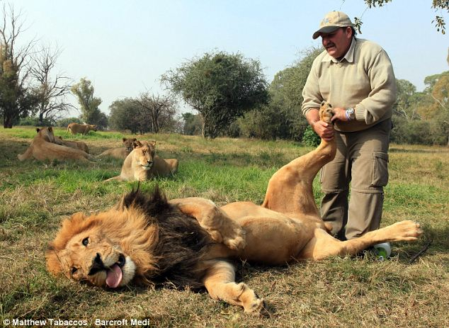 Alex Larenty plays 'This Little Piggy' with 40-stone Jamu at The Lion Park in Johannesburg, South Africa