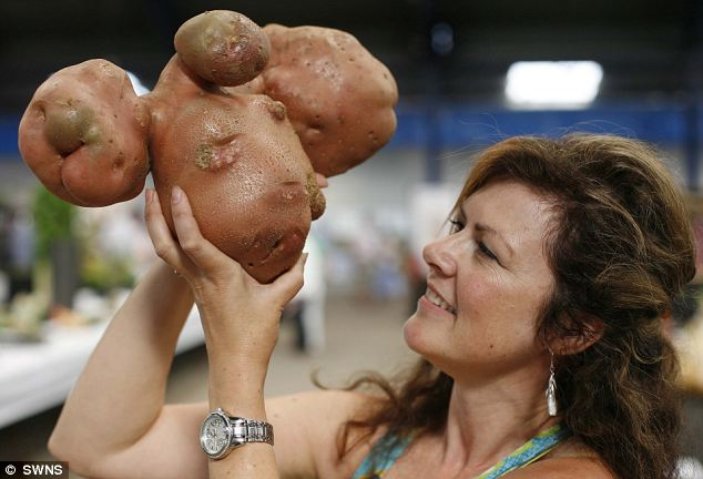 World's biggest: Vegetable enthusiast Sandy Davies with Peter Glazebrook's 8lbs 4oz potato at the National Gardening Show