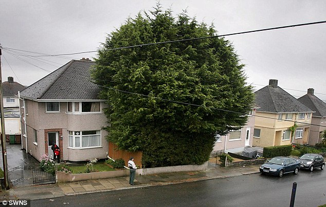 'Eyesore': David Alvand sparked fury among neighbours after he grew a line of 'monstrous' giant trees in his front garden