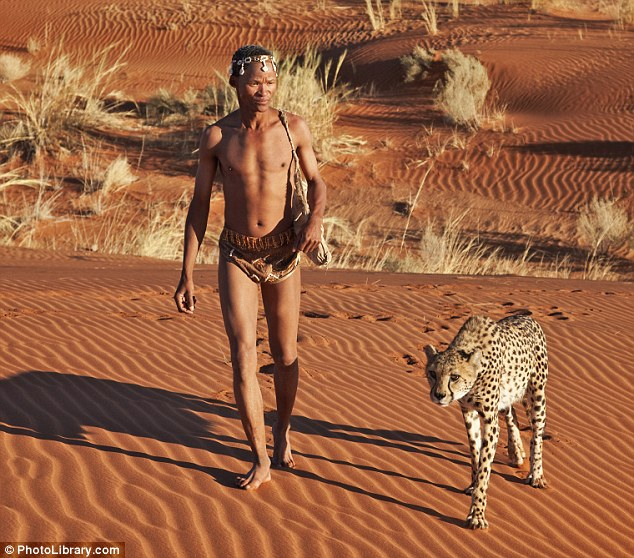 Walkies: A tribesman and an orphaned cheetah take an evening stroll together