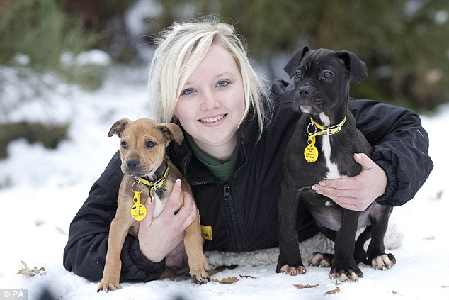 Dog carer Jess Ockwell with Brandy and Pudding before being placed with new owners