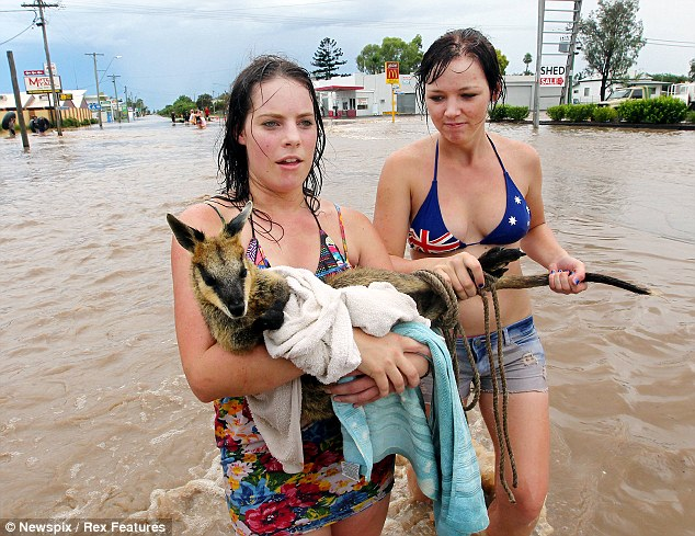 Survivor: Ellisha Johnston and Sarah Gilbert rescue a wallaby that they found struggling against floodwaters in the town of Dalby in Queensland