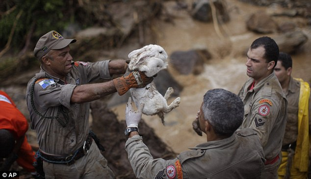 Saved: Rescue workers manage to pull a white rabbit up and save it from the mudlides