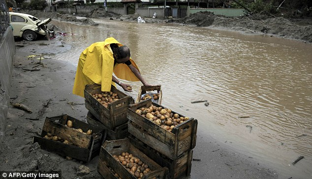 Desperate: A resident attempts to save some potatoes from floods in Nova Friburgo, near Rio de Janeiro