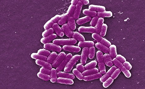 Resistance: Most cases of NDM-1 spotted so far by doctors have been found on e.coli bacteria