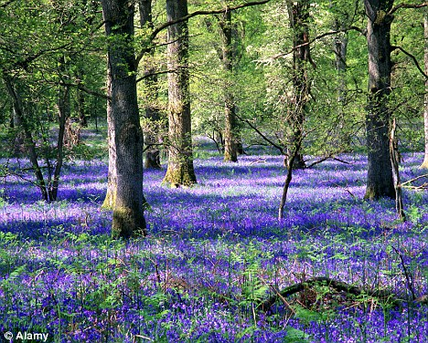 With assets that include the Forest of Dean (pictured), the New Forest and Sherwood Forest, it is unsurprising that the Forestry Commission sell-off is causing deep unease