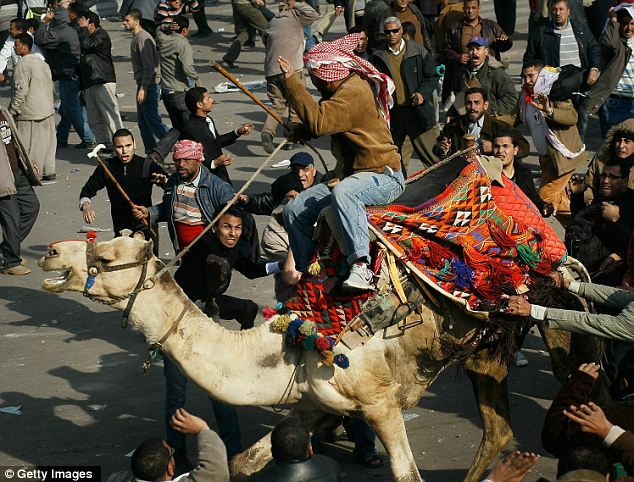 Mounted fights: A supporter of embattled Egyptian president Hosni Mubarek rides a camel through the melee