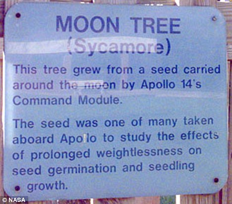 Historical importance: A former Nasa astronomer has spent the last 15 years trying to track down dozens of 'Moon Trees'