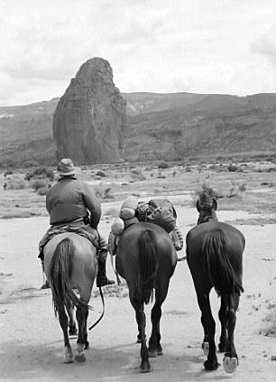 Horses in Patagonia desert