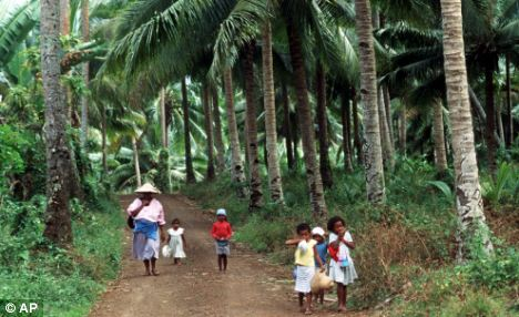 tropical trees of fiji