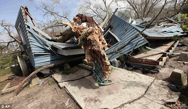 Aftermath: The huge fallen tree which destroyed Jalisa Granger's home in Rayne, Louisiana killing her as she protected her child