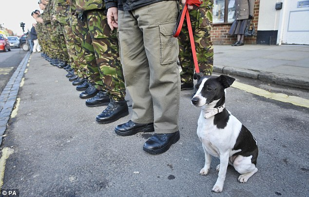 A puppy in line with soldiers waiting for the cortege for Lance Corporal Liam Tasker from the Royal Army Veterinary Corps to pass through the Wiltshire town of Wootton Bassett during his repatriation.