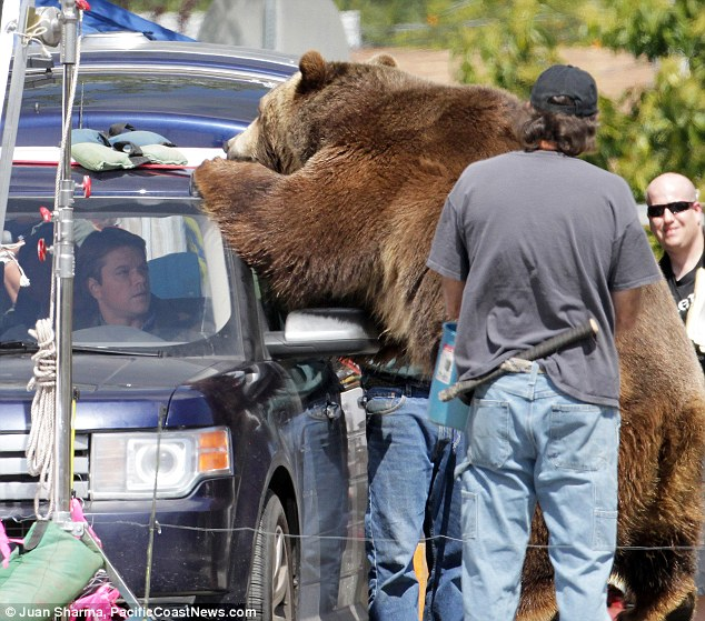 Big and scary: Matt Damon comes face to face with a grizzly bear on the set of his new film We Bought A Zoo