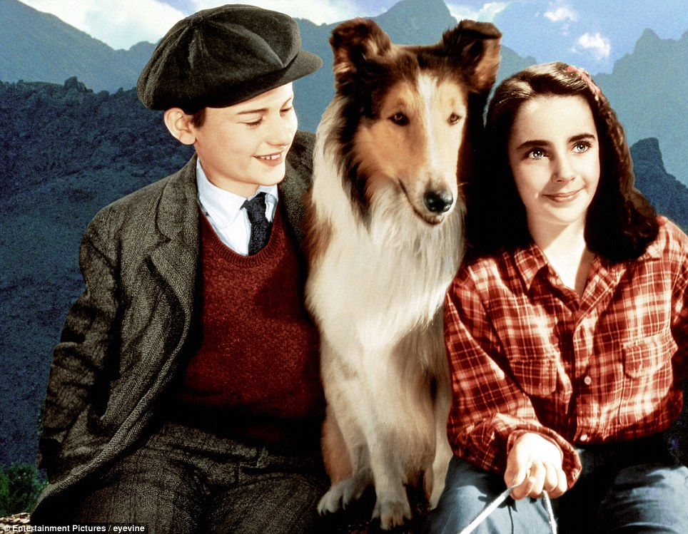 The child star: Elizabeth Taylor in her second film, Lassie Come Home (1943)