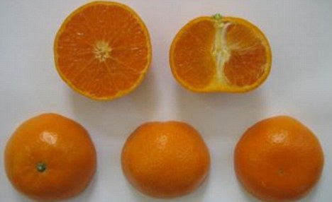 The scientists say the fruit is slightly larger than a mandarin,  contains 10 or 11 segments and has a thin, extremely smooth rind