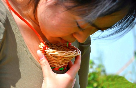 Easy does it: The picker places the tea leaf into her Chaliuqing, a handmade wicket basket