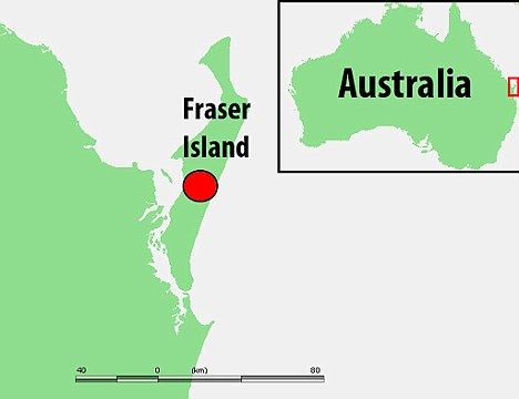 More than 200 dingoes live on Fraser Island, a popular tourist spot about 155 miles north of the state capital Brisbane