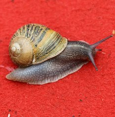 Culprit: Of all the pests that blight gardener's lives slugs and snails are at the top of the pile