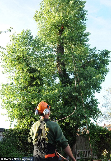 Surgeon to the rescue: Andre Parrot rescues Bess the cat with his advanced tree surgery tools