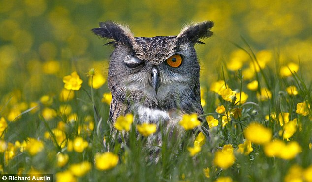 Eye say: A cheeky week from a wise old bird