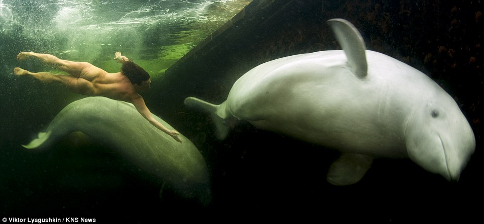 Breathtaking: the scientist uses yoga techniques to hold her breath for up to ten minutes at a time ask she frolics with the whales, Nilma and Matrena