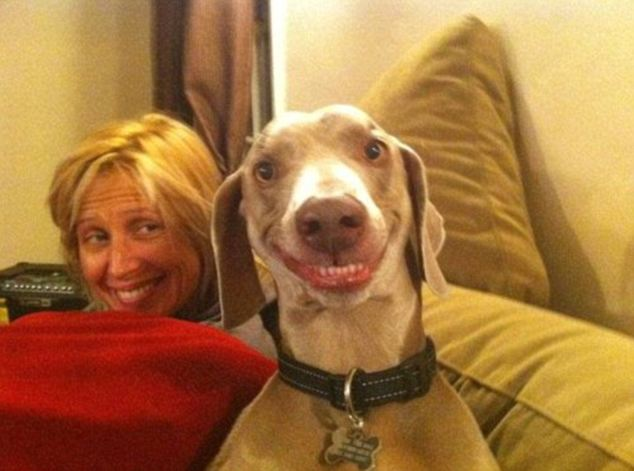 This smiling dog's human-like expression of happiness has made him an internet sensation