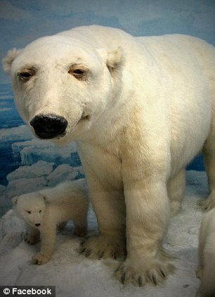 A stuffed polar bear posted on the facebook group called 'Badly stuffed animals'
