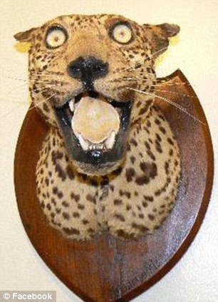 A leopard is fashioned onto a plaque taken from the the Facebook page 'badly stuffed animals'