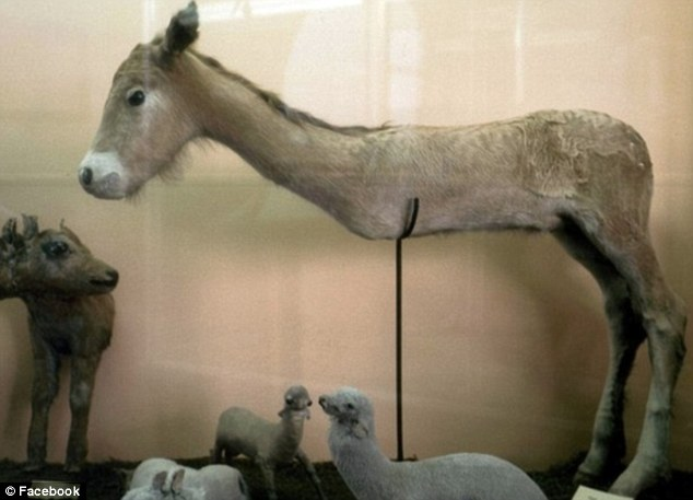 A two-legged donkey taken from the Facebook page 'badly stuffed animals'