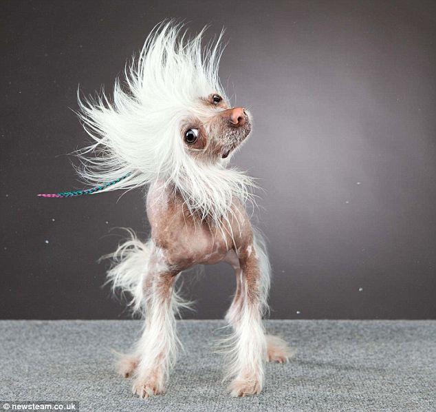 Sweet as a ... mutt? Little dogs gotta shake too...