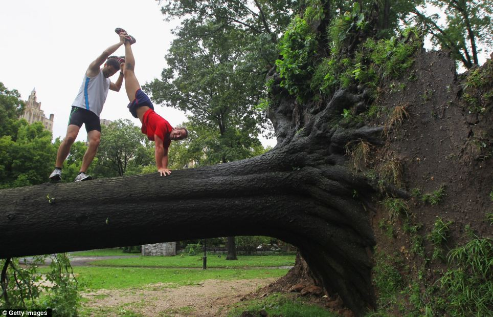 Resourceful: These two joggers in Central Park, New York, use a fallen tree to stretch before their work out