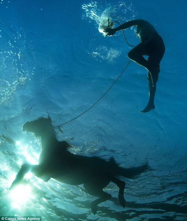 Swimming practice: The trainers will stay with their horses, who find the training in the water very hard going