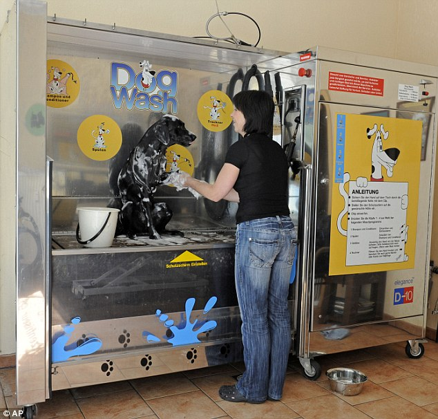Going through the dog wash: Ulrike Schubert soaps up Mara the Labrador in Germany's first dog wash station in Leipzig