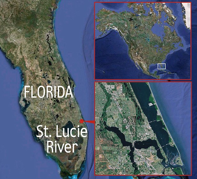 Locator map showing the St. Lucie River in Florida where teenager Tim Stroh caught a 12ft alligator