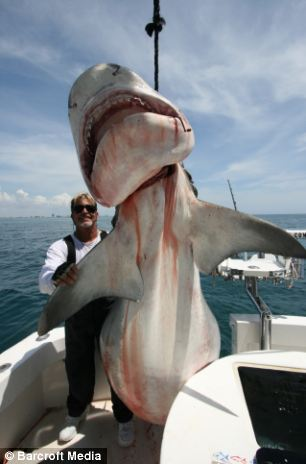 Prize: A 15ft tiger shark  hung on Mark's boat