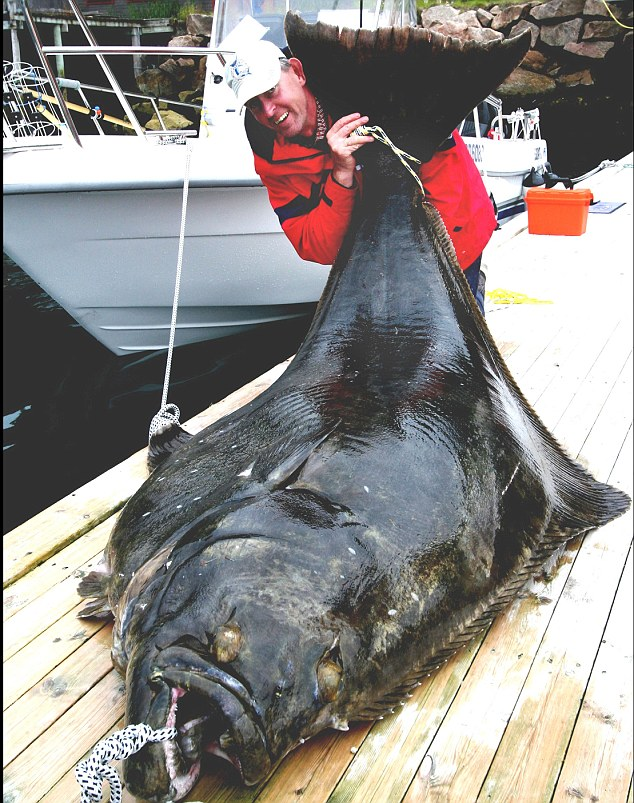 What a catch!: Reinhard Wuhrmann caught this halibut in the north of Norway, it took him three hours to pull the fish in