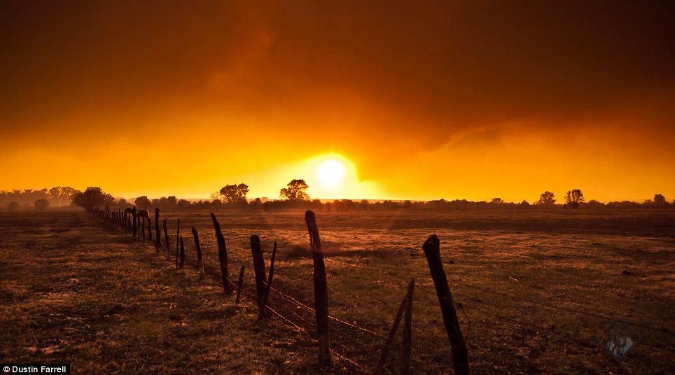 Glaring sun: This sombre field glitters as the sun dances in the film